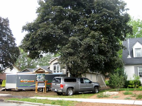 tree with truck