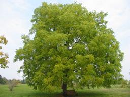 Black Walnut Arboretum Web
