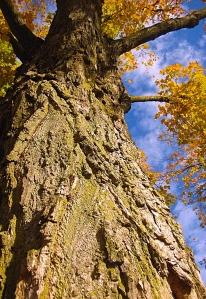 Towering Timber