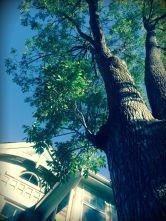 """""""Bedroom Tree"""", Austin McLeod, GCVI, 3rd in category Present"""