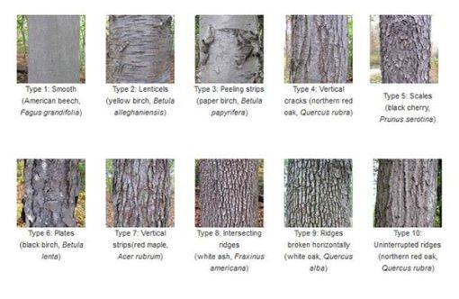 10_bark_types